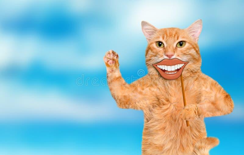 Carta della tenuta del gatto con lo smiley divertente fotografia stock