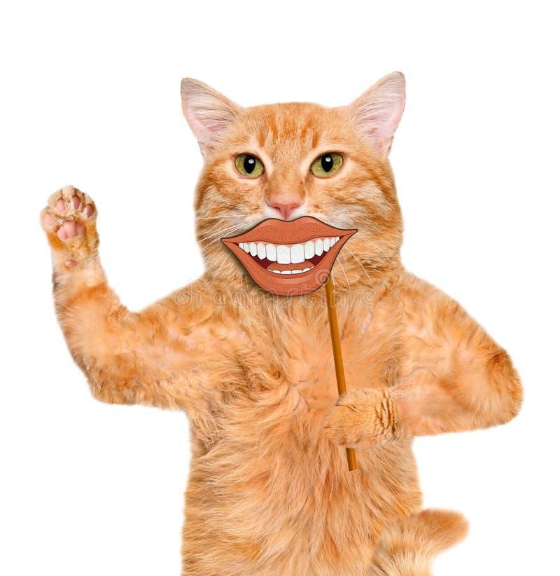 Carta della tenuta del gatto con lo smiley divertente fotografia stock libera da diritti