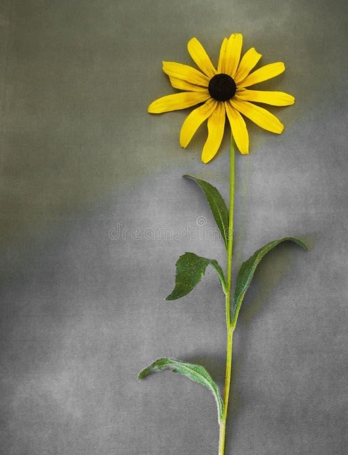 Carta di condoglianza con il fiore fotografie stock