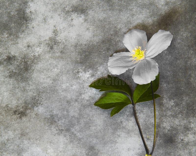 Carta di condoglianza - fiore fotografia stock libera da diritti