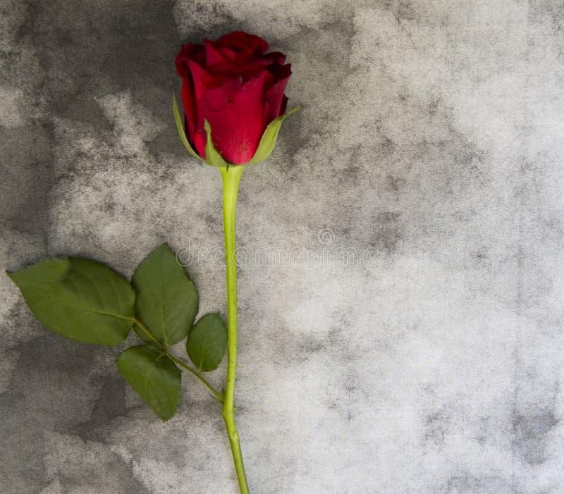 Carta di condoglianza - rosa rossa su marmo fotografia stock libera da diritti