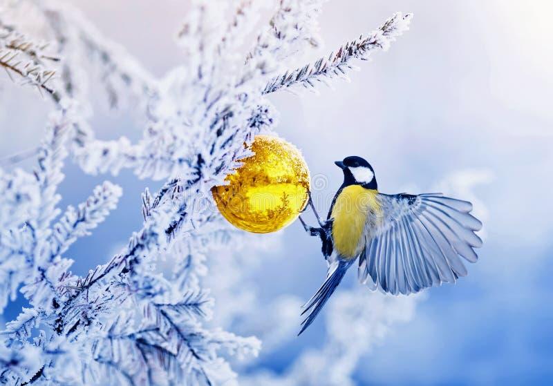 Carta di festa con gli sbattimenti del capezzolo dell'uccello nel parco di inverno sul Ch immagini stock