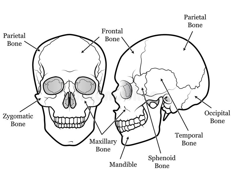 Carta do crânio ilustração do vetor