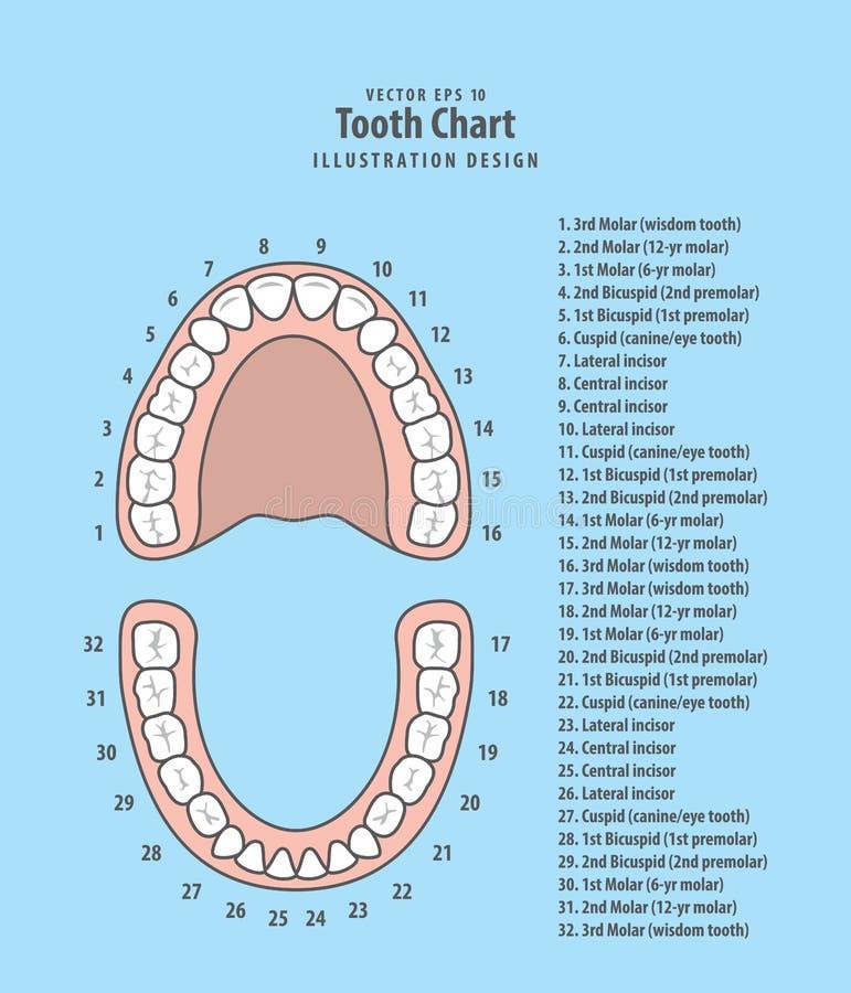 Carta do dente com vetor infographic da ilustração do número no azul ilustração royalty free