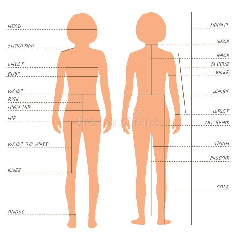 carta do tamanho das medidas do corpo, ilustração do vetor