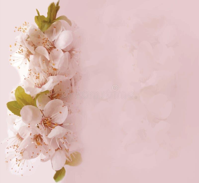 Carta floreale con la ciliegia del fiore illustrazione vettoriale