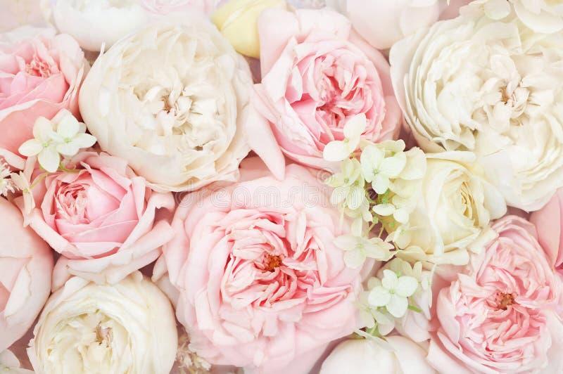 Carta floreale festiva di fioritura delicata sbocciante del fondo dei fiori delle rose di estate, del mazzo pastello e molle, ton immagini stock
