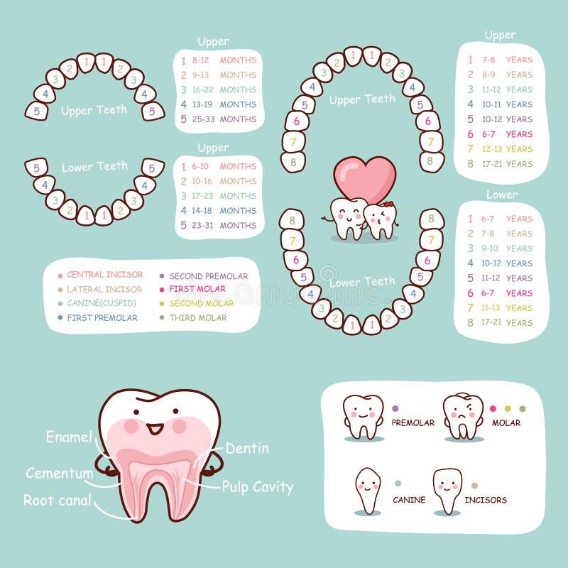 Carta humana da anatomia dos desenhos animados do dente ilustração stock