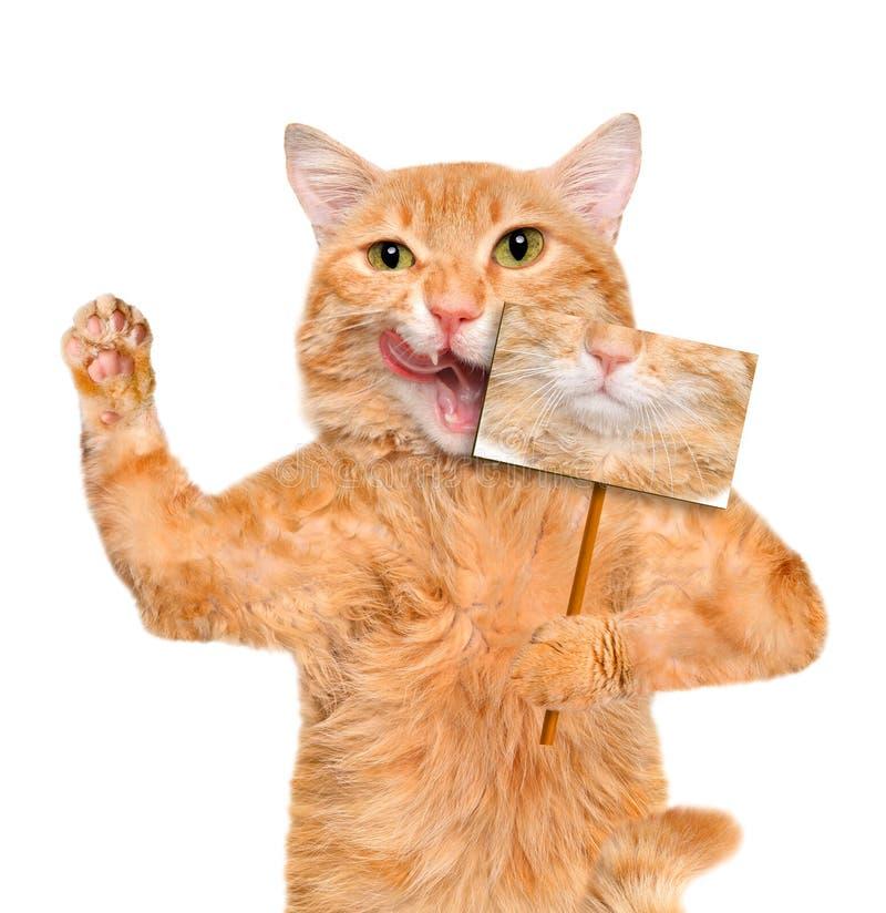 Carta rossa della tenuta del gatto con lo smiley divertente fotografia stock libera da diritti