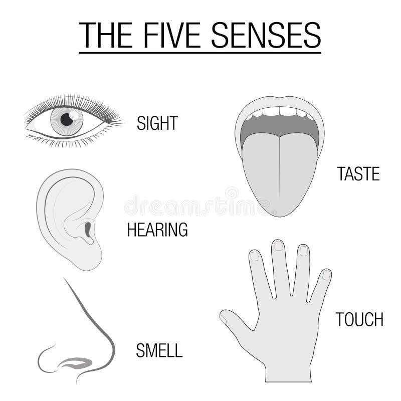 Carta sensorial de cinco órganos de los sentidos ilustración del vector