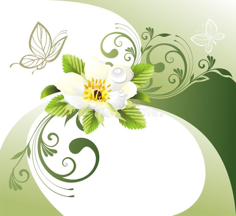 Carta verde con la flor y la mariposa libre illustration