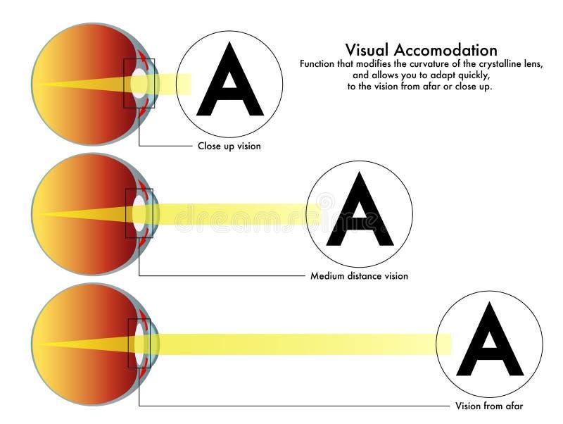 Carta visual da acomodação ilustração royalty free