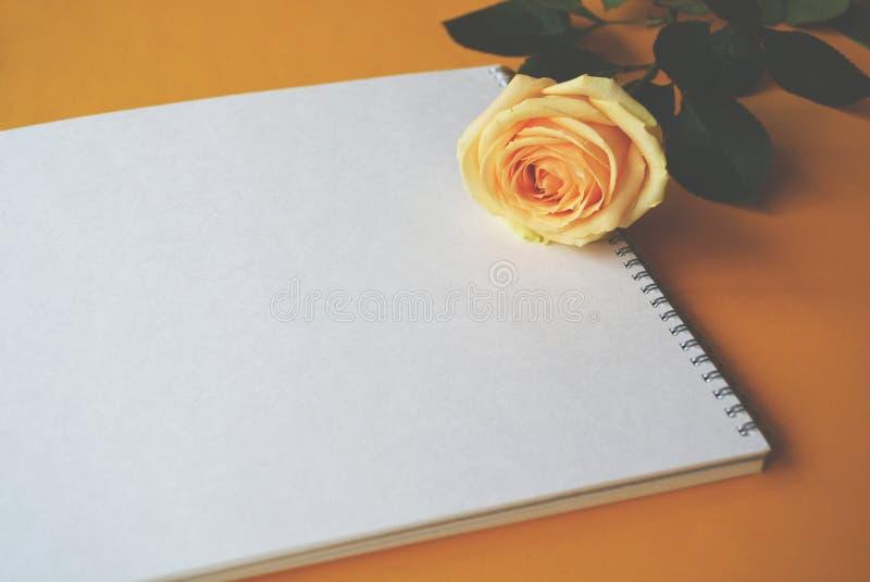 Carta vuota bianca e un fiore della rosa immagini stock libere da diritti