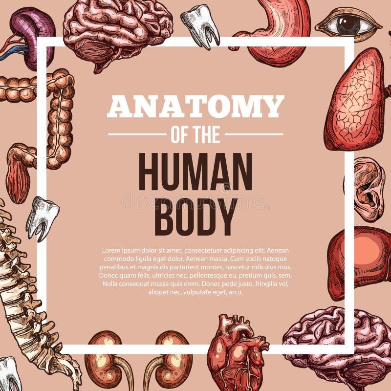 Cartaz da anatomia do corpo do esboço do vetor dos órgãos humanos ilustração royalty free