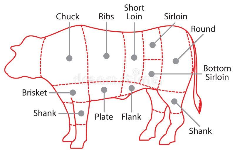 Download Cartaz da carta da carne ilustração stock. Ilustração de diagrama - 29836245