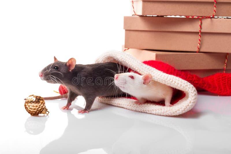Cartaz de novos anos para o feliz ano chinês de 2020 Ratos negros e brancos como símbolo do conceito de yin e yang Dois ratos com imagem de stock