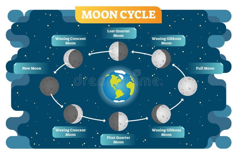 Cartaz do diagrama da ilustração do vetor do ciclo da fase da lua ilustração do vetor