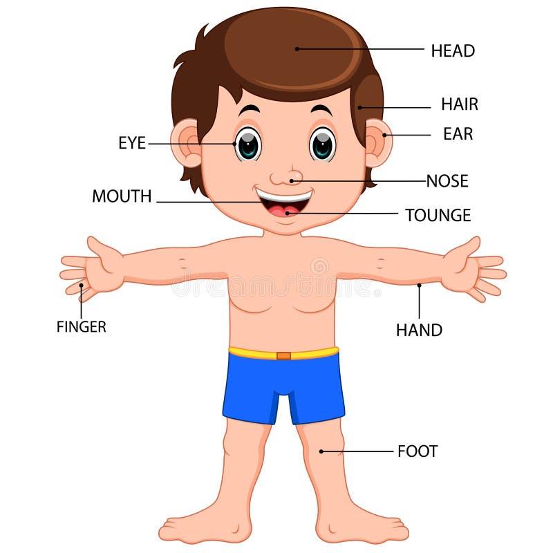 Cartaz do diagrama das partes do corpo do menino ilustração stock