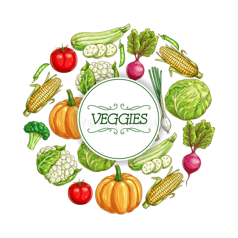 Cartaz do esboço dos vegetais para o projeto da etiqueta do alimento ilustração do vetor