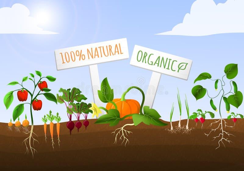 Cartaz do jardim vegetal ilustração do vetor
