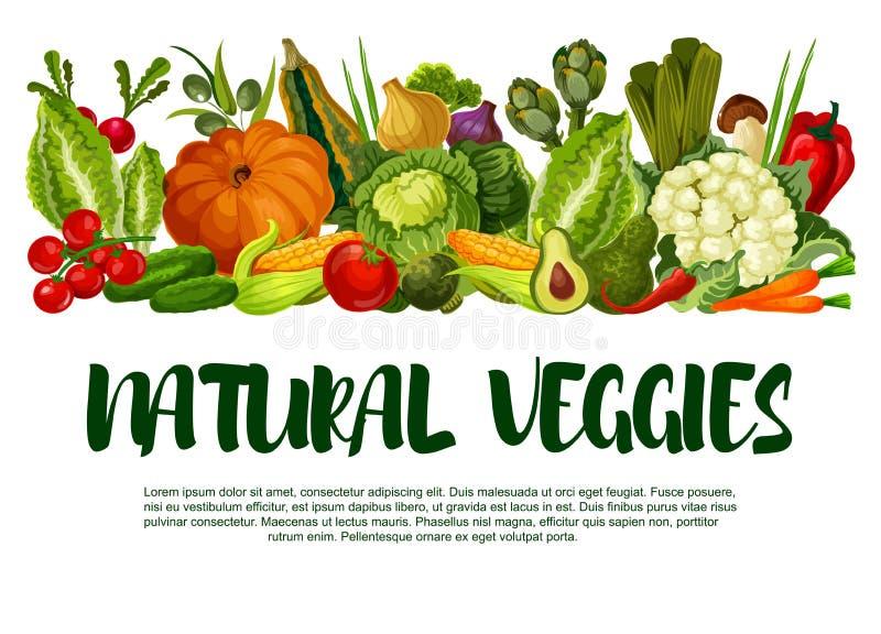 Cartaz do vetor dos vegetais ou da colheita dos vegetarianos ilustração royalty free