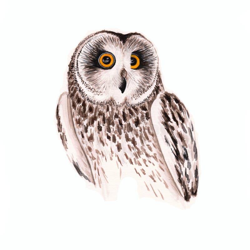 Cartaz natural da coruja da aquarela fotos de stock royalty free