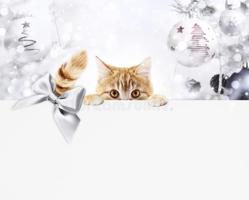 Carte cadeaux del gato del jengibre de la Navidad con las bolas brillantes y el ribb de plata fotos de archivo