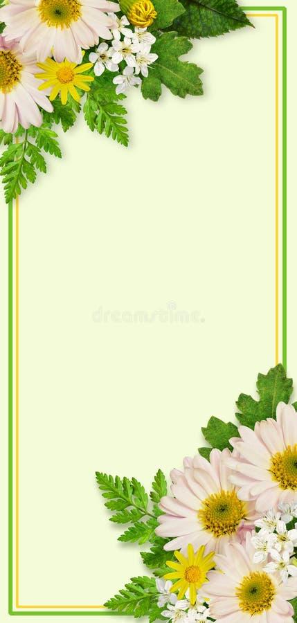 Carte d'invitation avec l'aster et les fleurs sauvages photographie stock