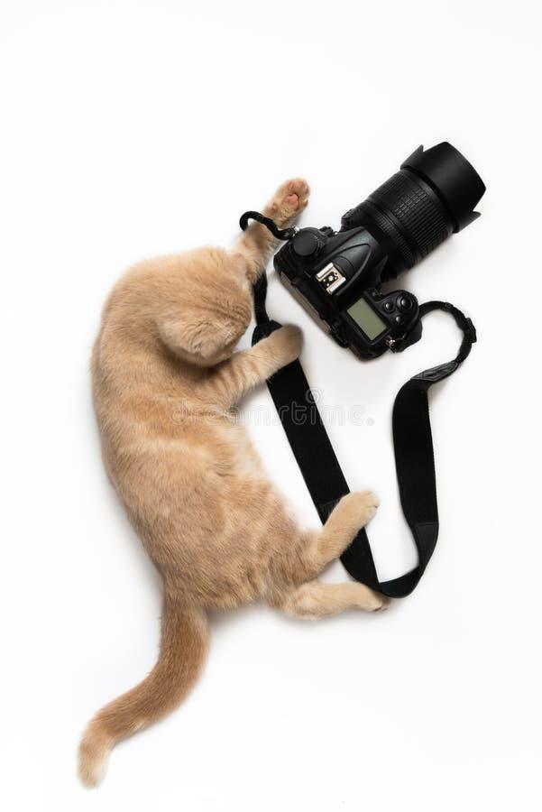 Carte de concept de photographe Chat mignon avec la caméra prenant une photo d'isolement sur le fond blanc Jour de photographie d images stock