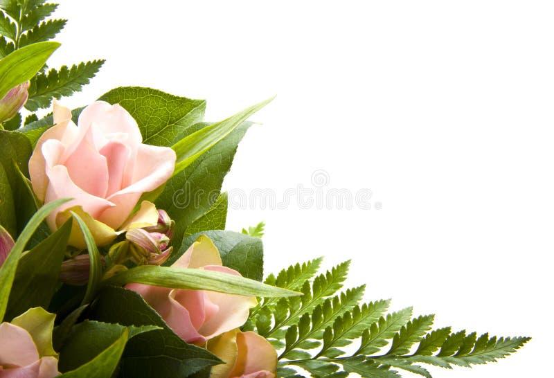 Carte de fleur photos stock