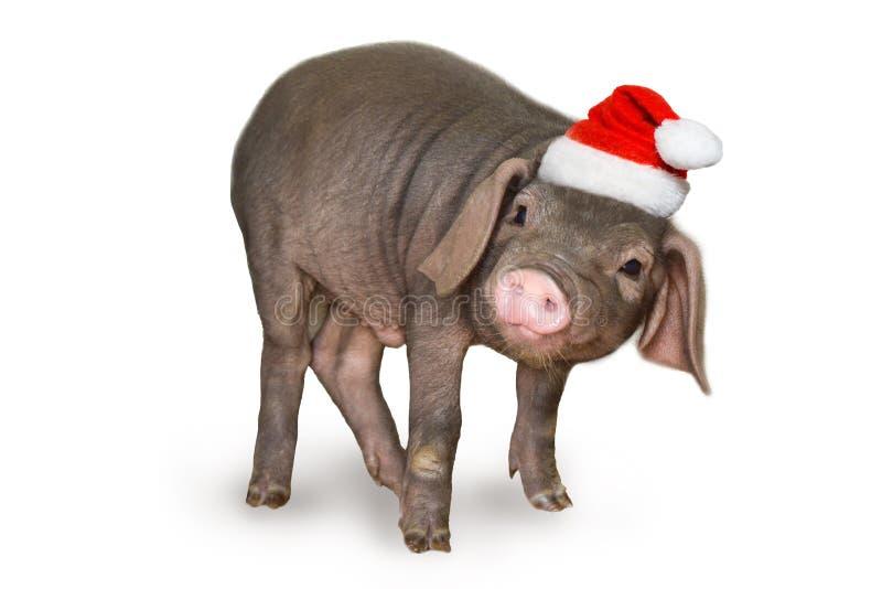 Carte de Noël et de nouvelle année avec le porc nouveau-né mignon de porcelet dans le chapeau de Santa d'isolement sur le fond bl images stock