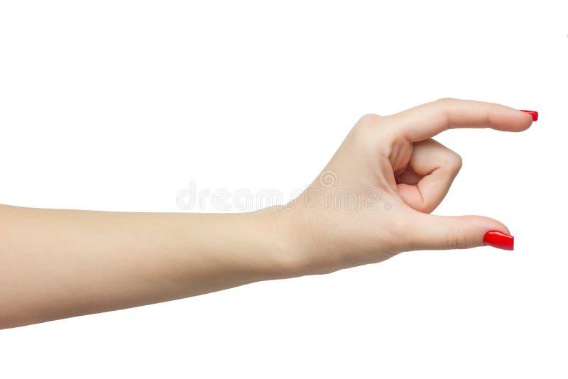 Carte de prise de main de femme, crédit, papier blanc ou autre d'isolement sur le fond blanc Femelle montrant l'espace vide pour  photographie stock libre de droits