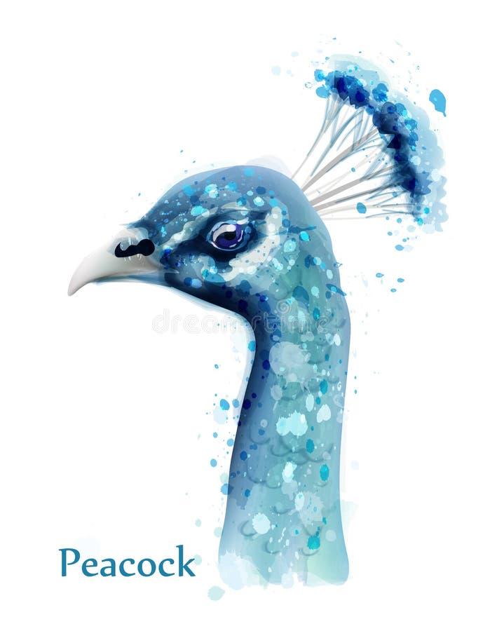 Carte de vecteur d'aquarelle de paon Oiseaux bleus d'isolement sur les milieux blancs illustration stock