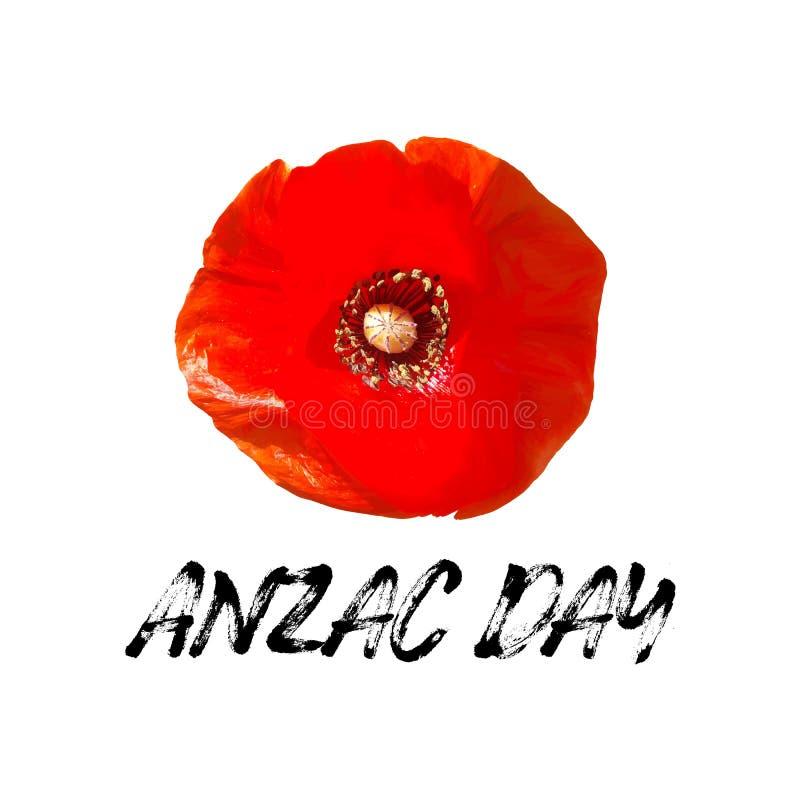 Carte de vecteur de jour d'Anzac Fleur lumineuse de pavot illustration de vecteur