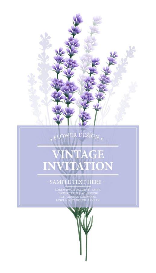 Carte de vintage avec la fleur de lavande Vecteur illustration de vecteur