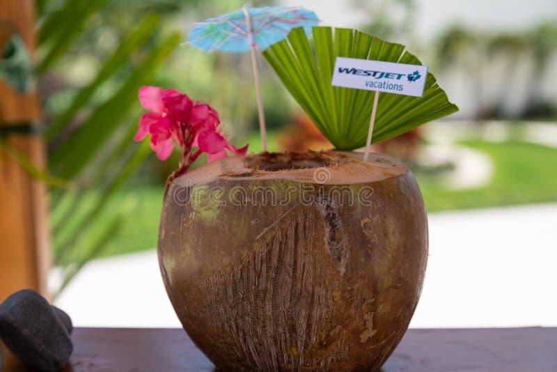 Carte de visite professionnelle de visite de vacances de WesJet de noix de coco photos libres de droits
