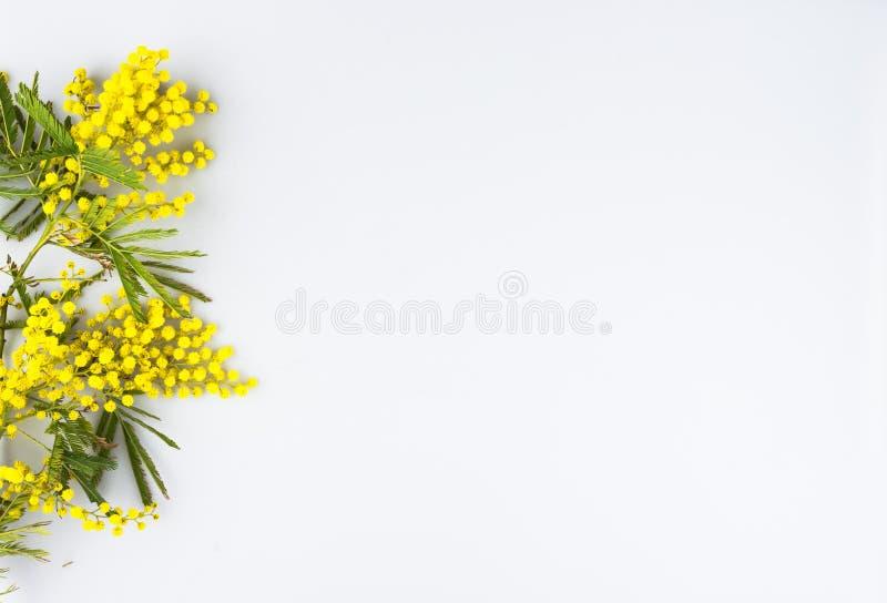 Carte de voeux de célébration de jour de femme, mimosa sur un fond blanc image libre de droits