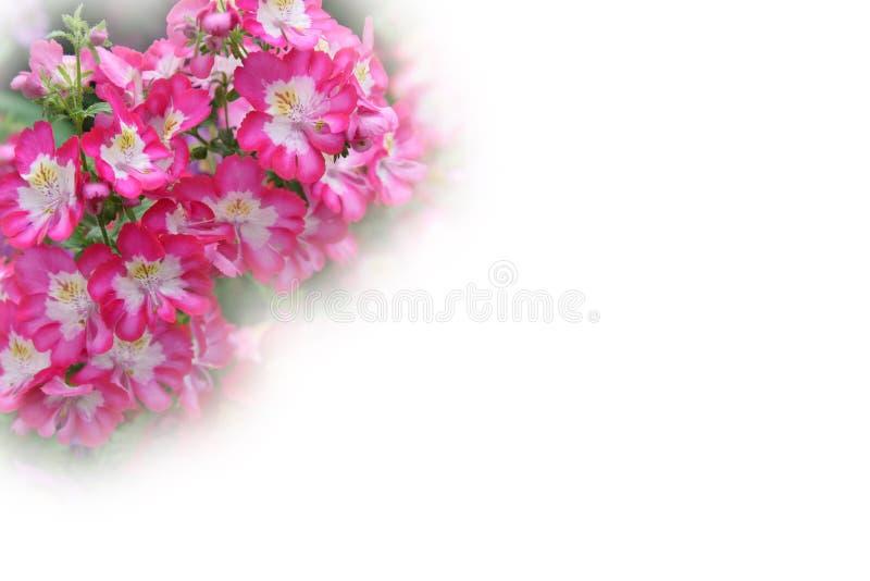 Carte de voeux de fleur photo stock
