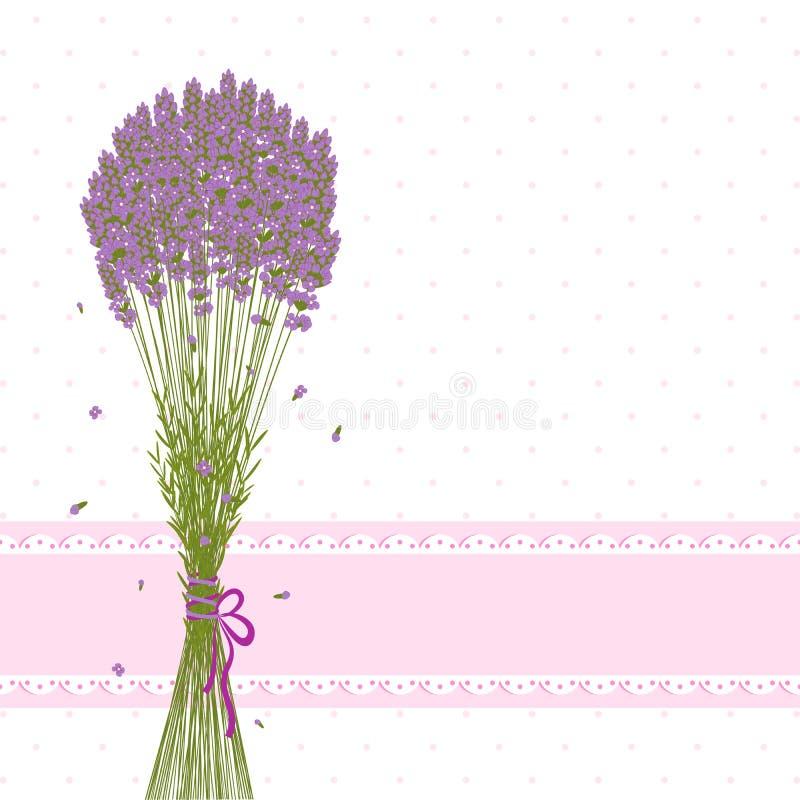 Carte de voeux pourprée de fleur de lavande illustration stock