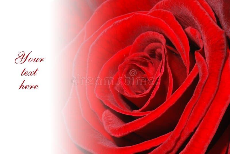 Carte de voeux rose de rouge photos libres de droits