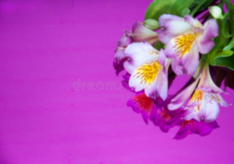 Carte de voeux de tache floue avec des fleurs Bannière avec des fleurs d'alstroemeria sur un fond au néon photos libres de droits