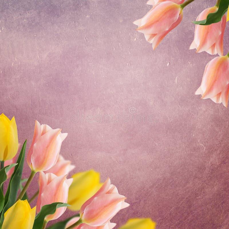 Carte postale avec des tulipes de fleurs fraîches et endroit vide pour votre te image stock