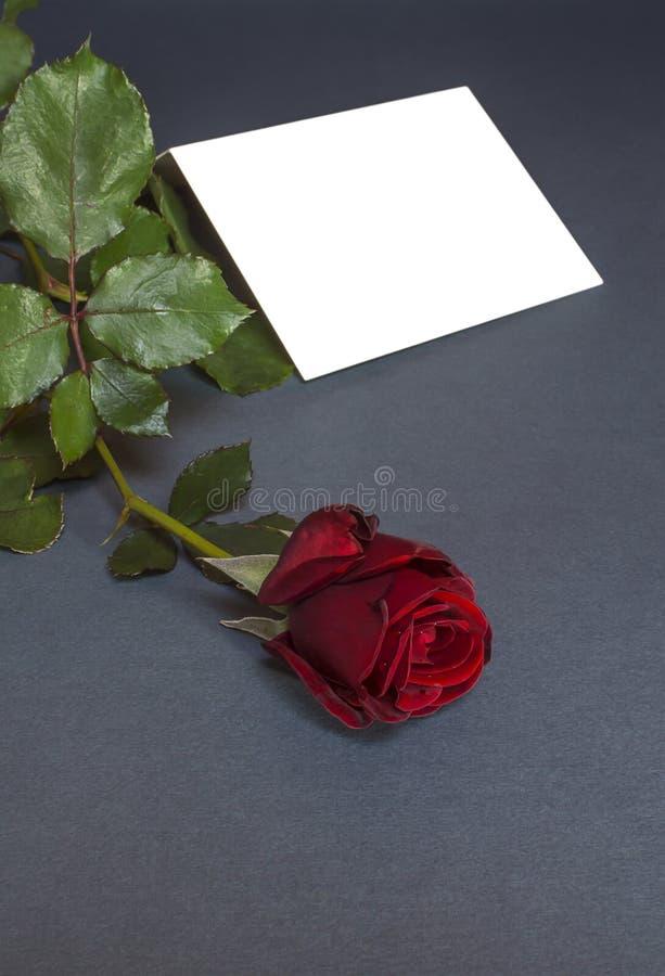 Download Carte Postale Avec La Rose De Rouge Et Empty Tag Pour Votre Texte Photo stock - Image du présent, frais: 56482348