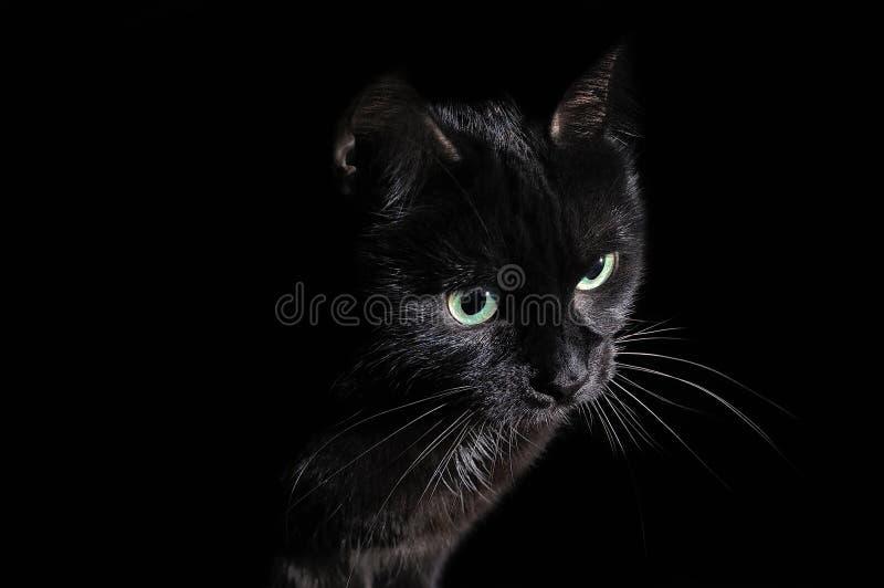 Carte postale pour Halloween : portrait d'un chat noir images libres de droits