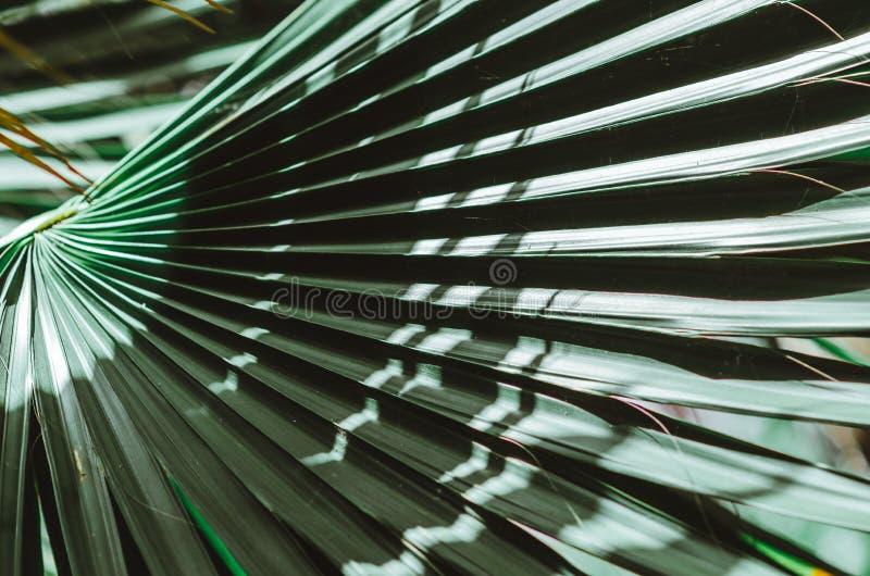 Cartel de la naturaleza Ramificación verde de la palma primer Ambientes tropicales fotos de archivo