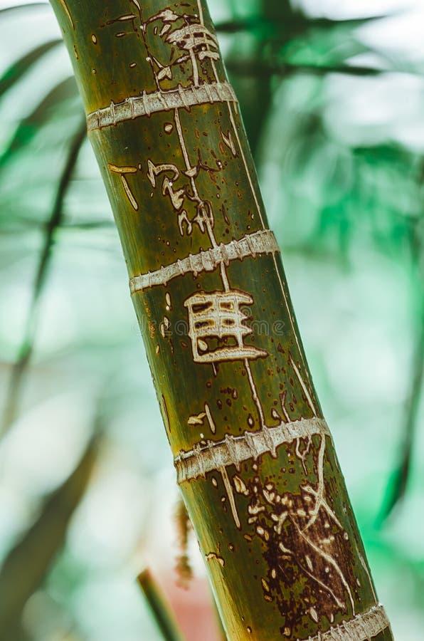 Cartel de la naturaleza Ramificación verde de la palma primer Ambientes tropicales fotos de archivo libres de regalías