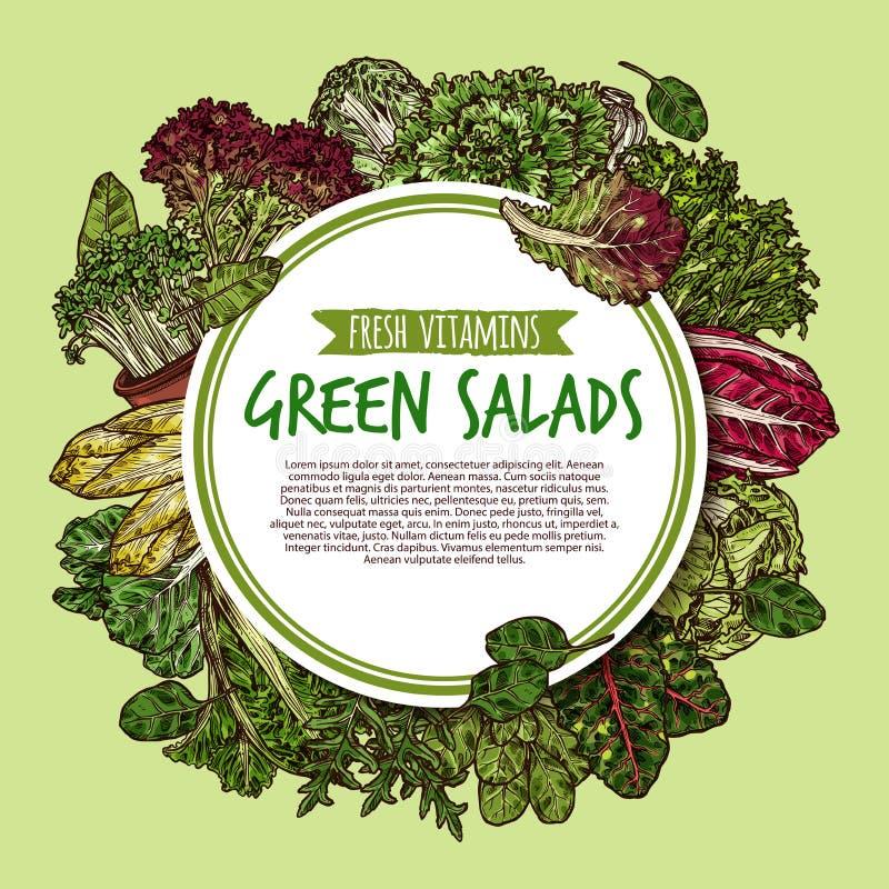 Cartel del bosquejo de la ensalada verde de la verdura de hoja fresca ilustración del vector
