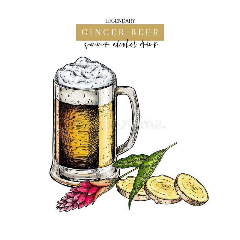 Cartel dibujado mano del pub de Oktoberfest Cerveza del ginger ale Vidrio coloreado vector, ra?z slised del jengibre, flor y hoja ilustración del vector