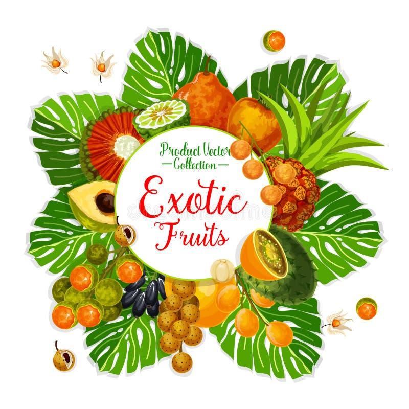 Cartel exótico de la fruta y de la baya con la palma tropical libre illustration