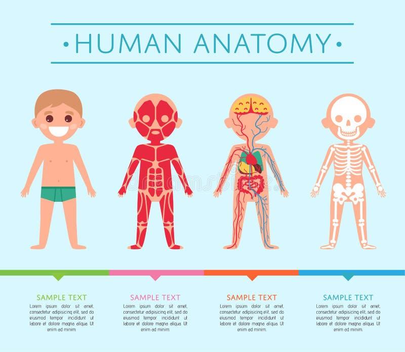 Excelente Anatomía Laminados Carteles Bosquejo - Anatomía y ...